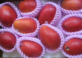 真っ赤になったアップルマンゴー